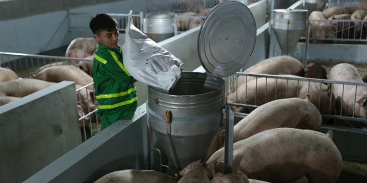 Liên kết từ sản xuất đến tiêu thụ gia cầm giúp tăng hiệu quả chăn nuôi